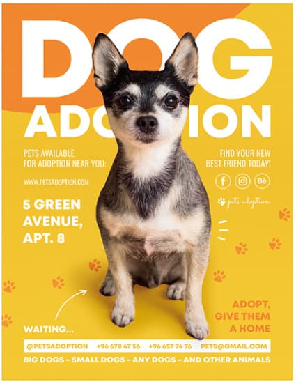 Free Dog Adoption PSD Flyer Template